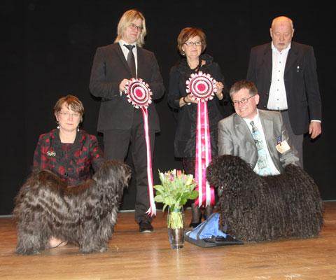 Hallandshund-2013