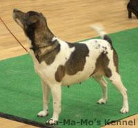 Hallandshund-2013-100