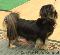 Hallandshund-2013-109