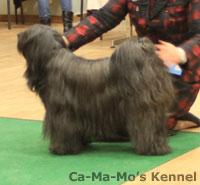 Hallandshund-2013-114