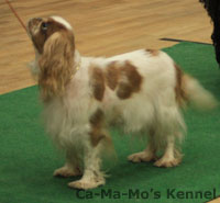 Hallandshund-2013-121