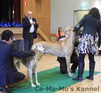 Hallandshund-2013-006