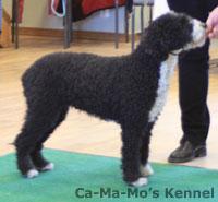 Hallandshund-2013-022