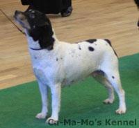 Hallandshund-2013-041