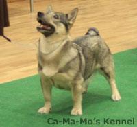Hallandshund-2013-085