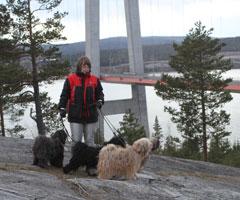 Skellefteå-2014-003